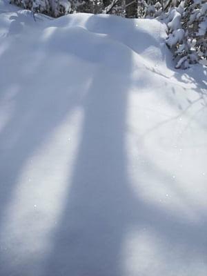 Tragedie in Alpii italieni:19 schiori au fost surprinsi de o avalansa - Doi au murit