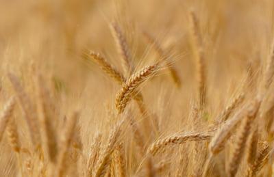 UE critica decizia Romaniei de a interzice exporturile de produse agricole