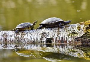Un raport al ONU anunta un dezastru ecologic: Pana la un milion de specii de plante si animale risca sa dispara