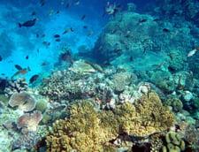 Vacanta in Gradina Edenului: Papua Noua Guinee, tinutul aventurilor de neuitat