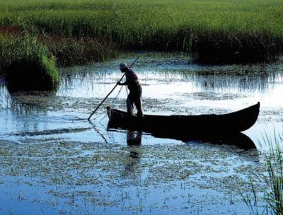 Vanatoarea in Delta Dunarii, interzisa din nou