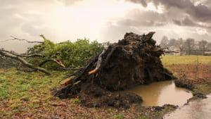 Vantul a facut ravagii in centrul tarii: Copaci smulsi, localitati fara curent