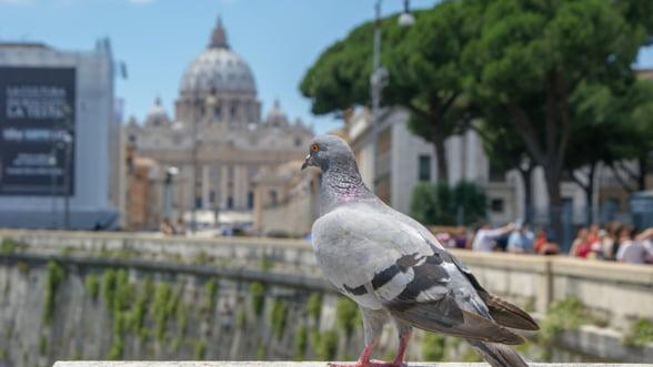 Vaticanul sustine ca sistemul financiar are nevoie de o infuzie de etica