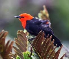Vezi care sunt cele mai bune destinatii din lume pentru birdwatching