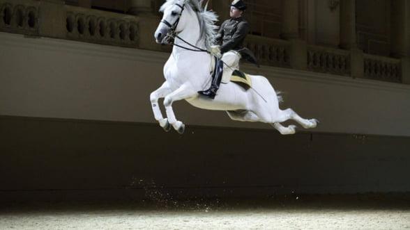 Viena altfel: Nu rata spectacolele Spanish Riding School