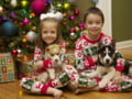 Vine Mos Craciun? 5 tipuri de animale pe care copiii le doresc cadou