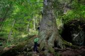 Voteaza si tu acest arbore din Romania!