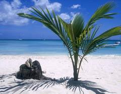 Vrei sa-ti petreci vara sub un palmier? Vezi cele mai bune oferte de avion