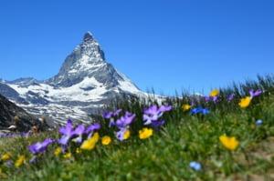 Zapada dispare din Elvetia, inclusiv din Alpi