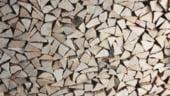 Forestierii avertizeaza: Romanii risca sa ramana fara lemn de foc in 2019