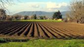 Reforma Politicii Agricole Comune, aprobata de Parlamentul European