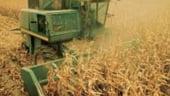 Criza alimentara ne schimba meniul zilnic