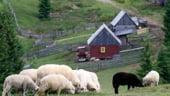 Piata mondiala de produse ecologice: 40 de miliarde dolari