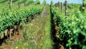 Romania, intre primii 15 exportatori mondiali de materii prime ecologice