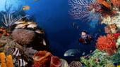 Camere foto pentru un hobby de adancime - fotografia sub apa