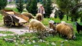 Proiect unic in Europa, intr-un parc din Bucuresti: Satul biblic