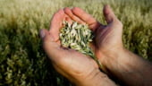 PSD si PC vor depune motiunea pe agricultura