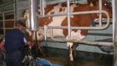 Constantin promite finantarea proiectelor integrate din sectorul laptelui din toate satele romanesti