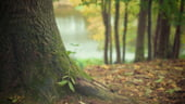 Forestierii se plang ca de la anul nu mai pot taia padurile, in urma unei hotarari a lui Ciolos din 2016