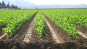 Vreti sa faceti afaceri in agricultura? Iata cum puteti obtine bani europeni