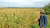 Ponta: TVA diferentiat: 9% pentru buget, 15% inapoi la fermier