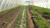 Cum pot deveni rentabili micii fermieri - Care sunt cele mai avantajoase investitii