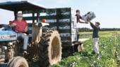"""Tinerii fermieri, """"rasfatati"""" in Noua Politica Agricola Comuna"""