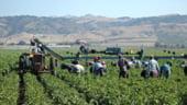 Agentia de Plati pentru Dezvoltare Rurala isi face site pentru informarea beneficiarilor