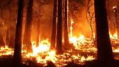MAE a emis alerta de calatorie pentru Suedia, tara ravasita de incendii de padure de peste o saptamana
