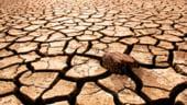 Care este valoarea ajutorului de minimis pentru fermierii afectati de seceta