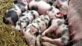 Nemtii vor sa impuna restrictii in agricultura proprie: Nu poti sa umpli fiecare frigider din China cu carne de porc din Germania!