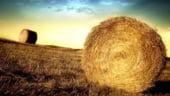 Legea vanzarii terenurilor agricole, pe masa Guvernului pana la finele lunii august