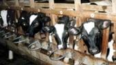INS: Scadere usoara la productia de animale si pasari in 2012