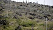 Romsilva a recuperat in acest an peste 27.000 de hectare de padure retrocedate ilegal
