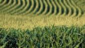 APIA verifica suprafetele agricole declarate de catre fermieri pentru 2013