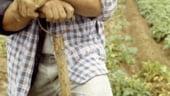 APIA: Fermierii pot completa electronic declaratia de suprafata pentru acordarea subventiei