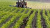Ghetea, CEC Bank: Agricultura va fi noul boom in economia romaneasca