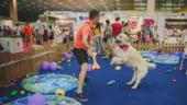 Vineri incepe PetExpo 2019, singurul targ dedicat animalelor de companie