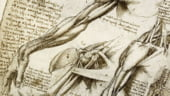 Expozitie inedita cu lucrari medicale ale lui Da Vinci (Video)