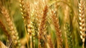 Republica Moldova imprumuta 25 de milioane de dolari de la BERD, pentru agricultura