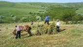 Toamna subventiilor pentru agricultori: Vezi cati bani iau fermierii din fonduri europene