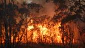 Romsilva: 970 hectare de padure, distruse de incendii