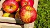 Legume si fructe de import, vandute drept romanesti. Ce amenzi au primit comerciantii