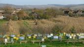 STARTUP Harnicia albinelor aduce profit si cu o investitie mica - 7.000 de euro