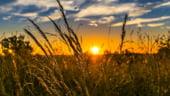 Romania a urcat in 2018 pe locul trei in UE la productia de cereale