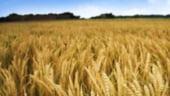 Ucraina renunta la limitarea exporturilor de cereale