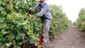 800.000 euro pentru monitorizarea sectorului viticol