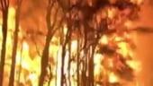 """Situatie critica in Australia: Mai multe incendii de padure au fuzionat intr-un """"mega-focar"""". Focul arde necontrolat la nord de Sydney"""