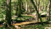 O noua centrala termica pe baza de biomasa va fi construita in Valcea