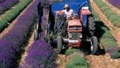 Se poate face agricultura si pe suprafete mici. Vezi exemple de succes
